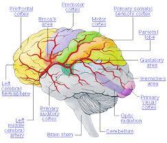kanker otak2 « Cara mengobati berbagai penyakit