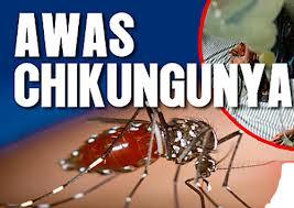chikungunya11